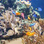 Blue-Reef Newquay Aquarium