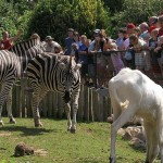 newquay-zoo-cornwall
