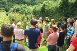 Camel Valley Vineyard Tours